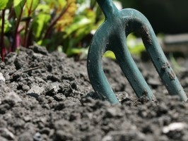 10 Ways to Reduce Your Vegetable Gardening Budget
